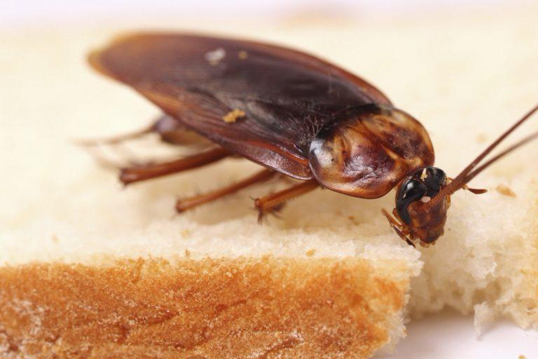 Причины появления тараканов в квартире, откуда они берутся и пути их проникновения