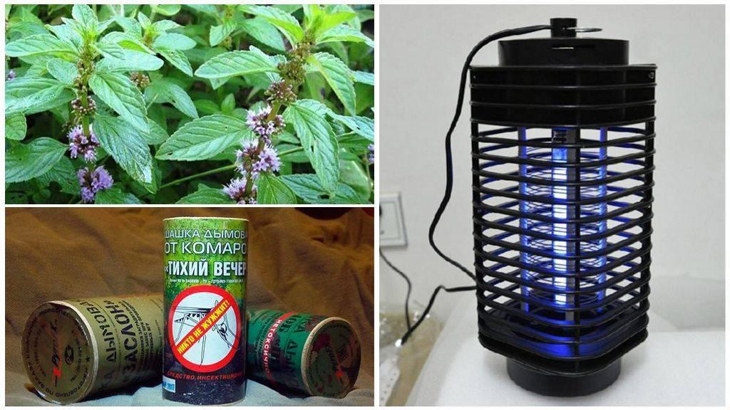 Какой запах не любят мухи?