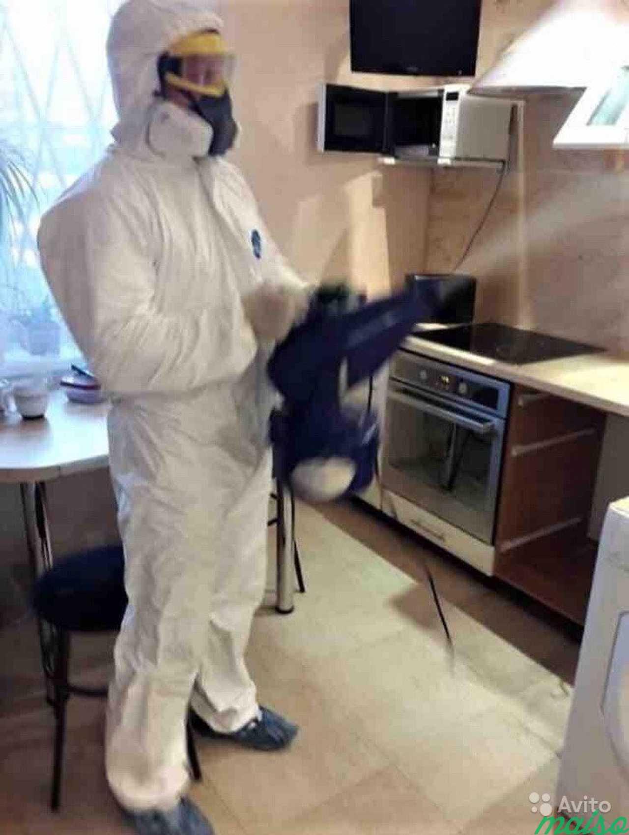 Борьба с тараканами: средства и методы уничтожения - мужик в доме.ру
