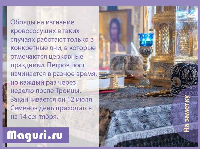 Различные молитвы, заговоры сибирской целительницы и обряды, чтобы избавиться клопов в квартире
