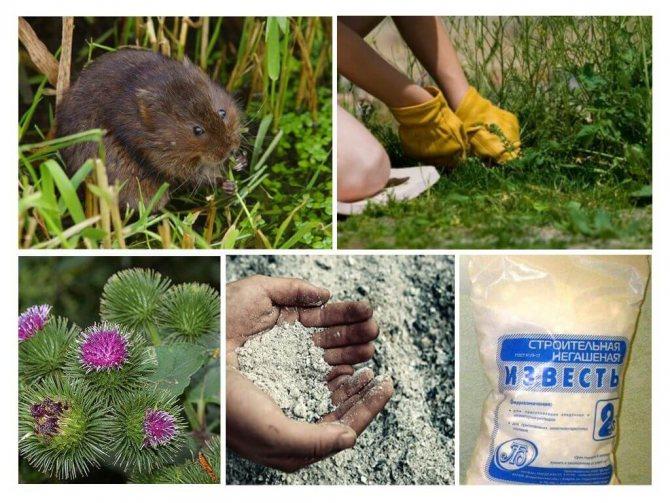 Год крысы – характеристика мужчин, женщин и детей, совместимость с другими знаками