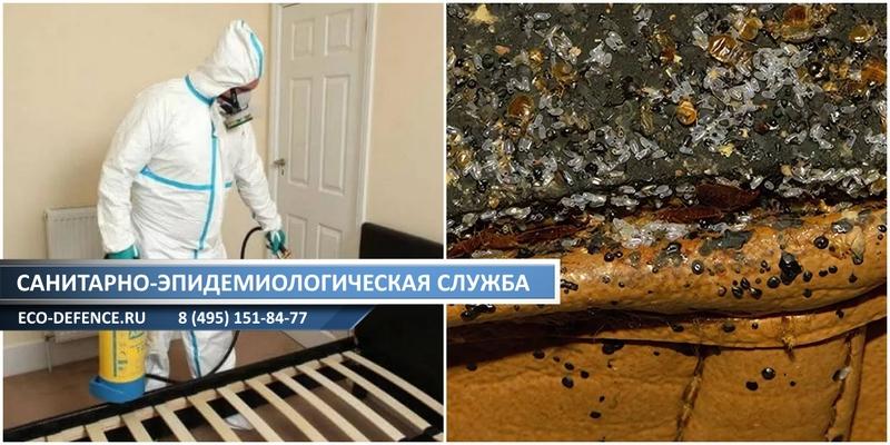 Как избавиться от тараканов в общежитии: 10 эффективных средств