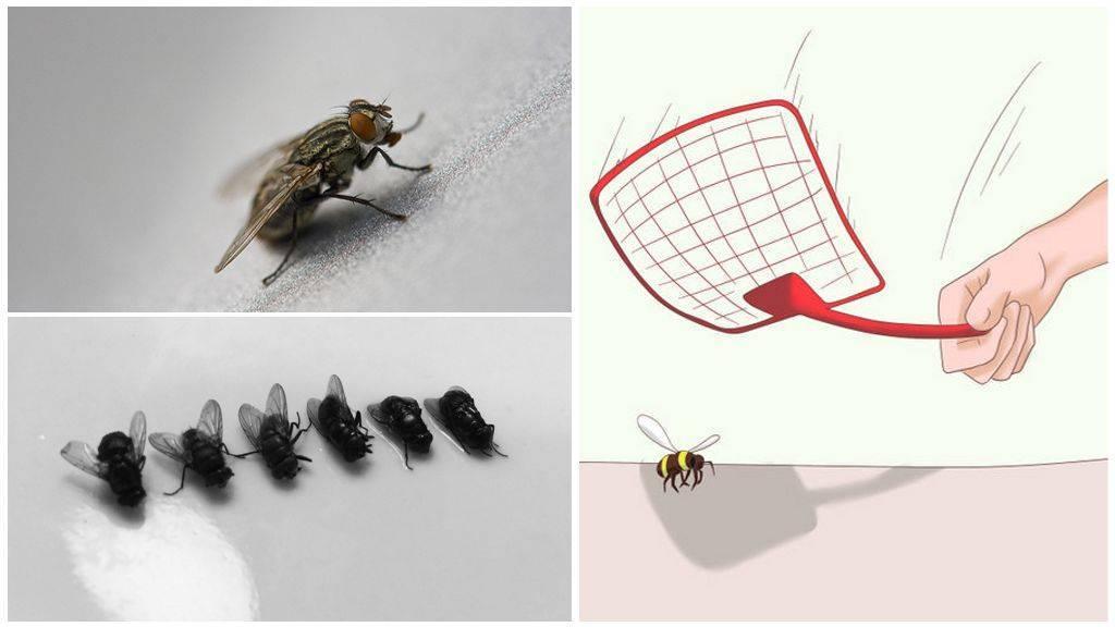 Как избавиться от мух в доме и на улице: лучшие способы борьбы с мухами