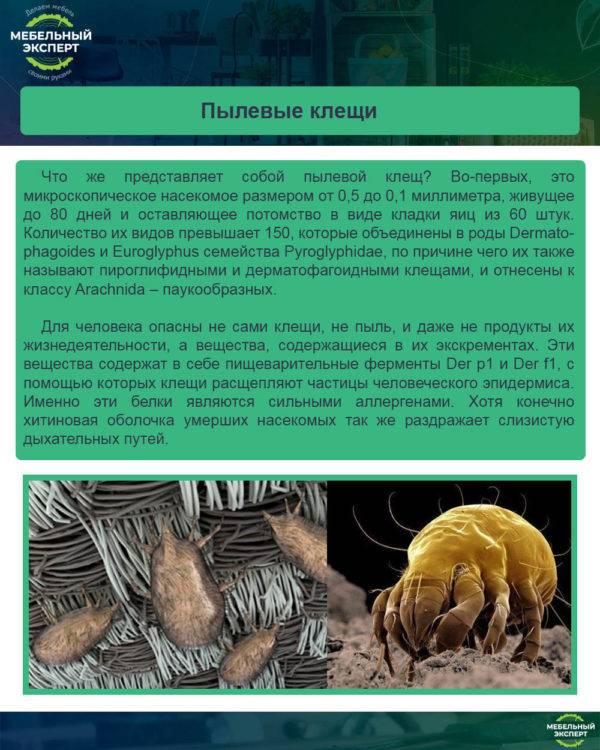 Пылевой клещ selo.guru — интернет портал о сельском хозяйстве