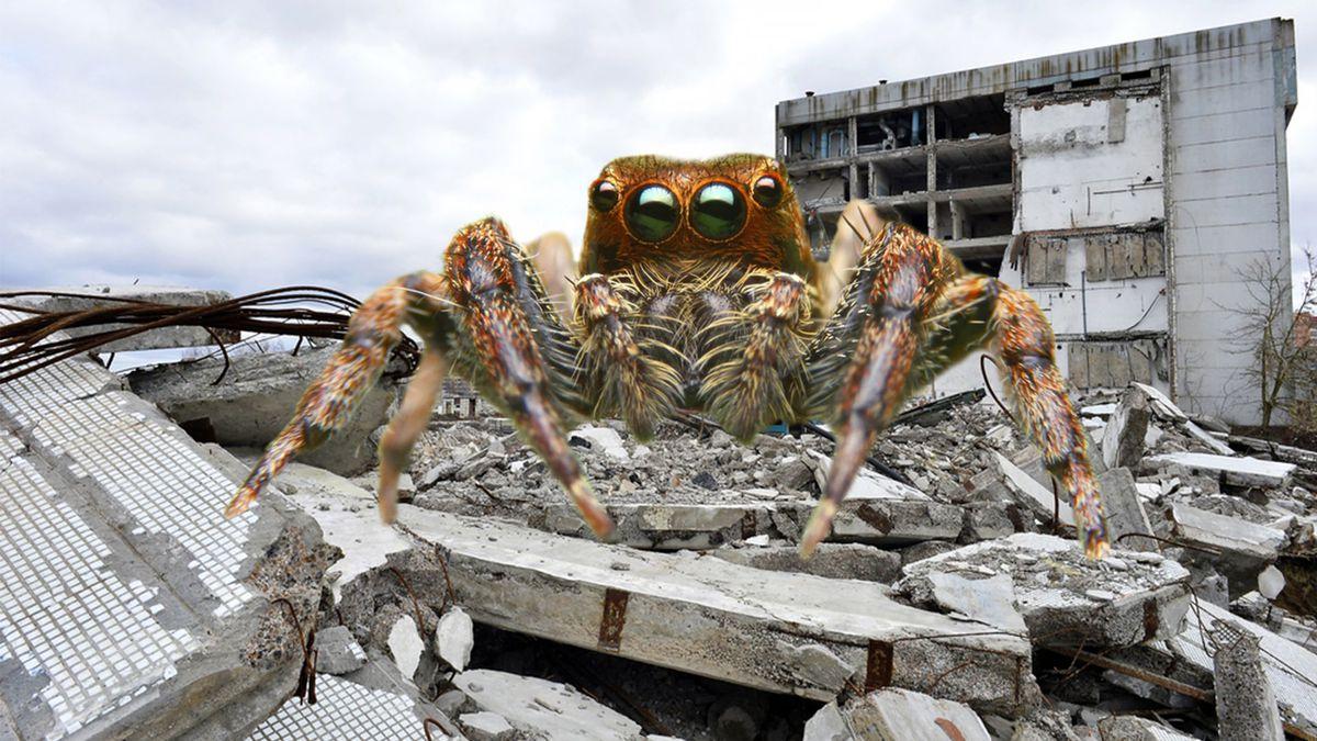 Самые страшные, опасные и огромные пауки в мире