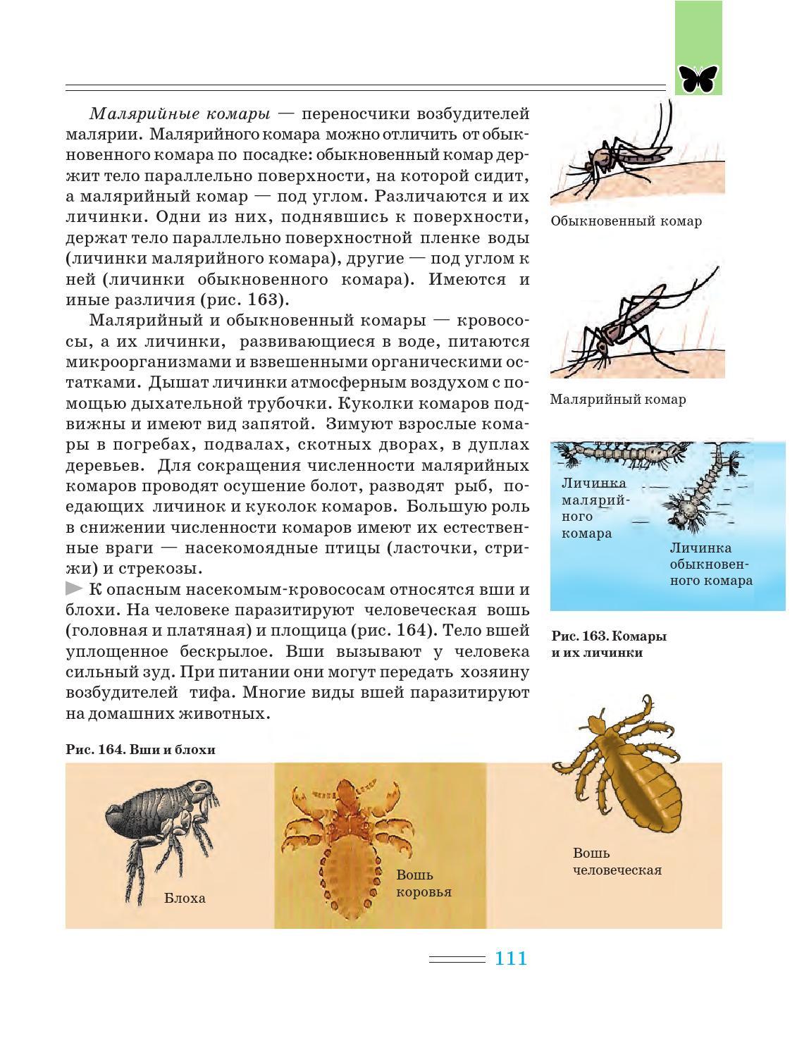 Укус малярийного комара и его последствия для человека