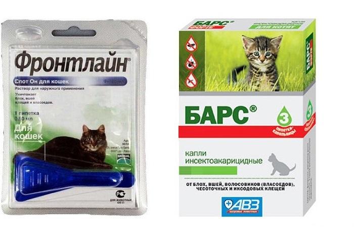 Что делать если кот слизал капли от блох?