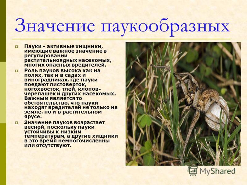 Роль в природе насекомых, их практическое значение для человека