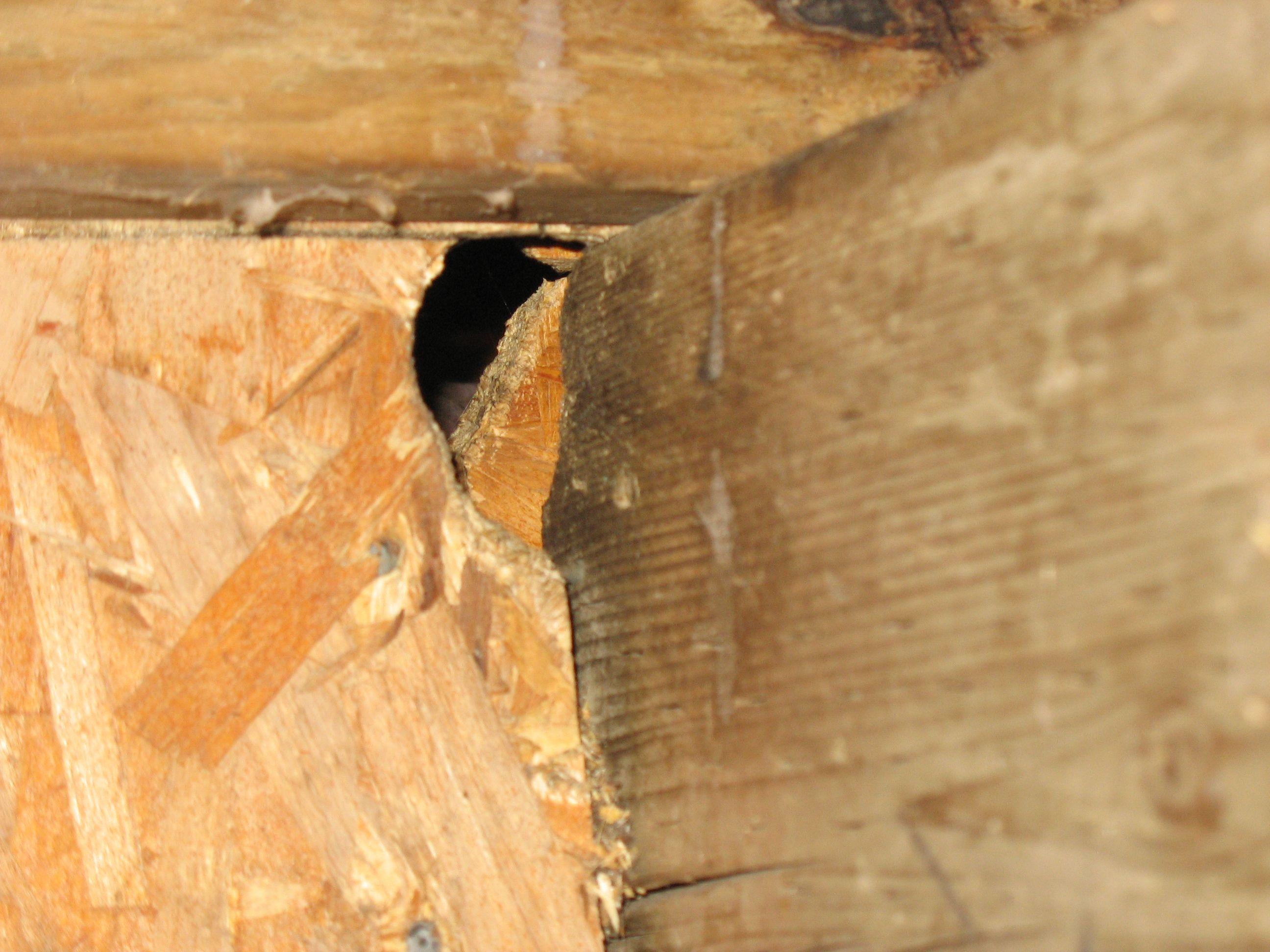 Как защитить дачный домик от мышей на зиму