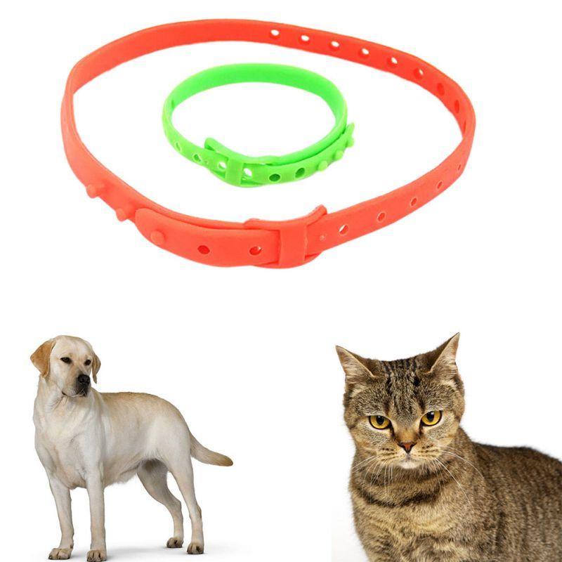 Ошейник от блох для кошек и котят: как действует, какой лучше, сколько и нужно носить?