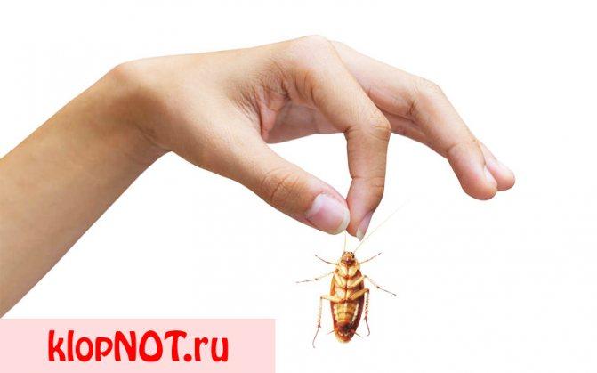 Кусаются тараканы или нет
