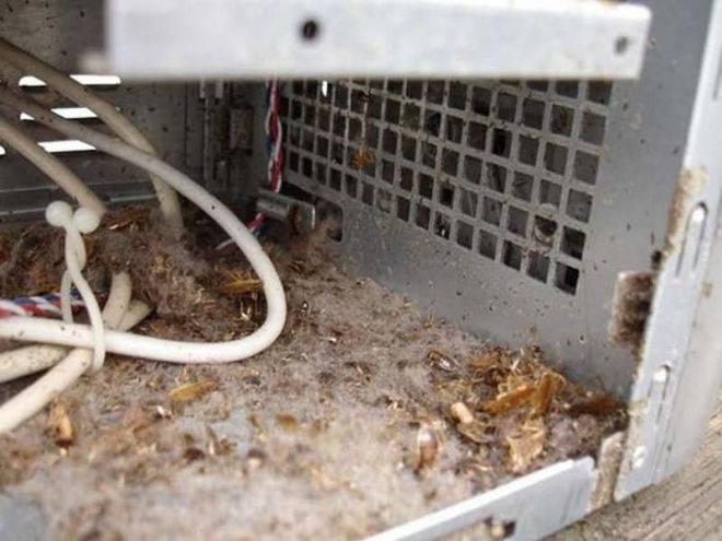 Как вывести тараканов из холодильника, микроволновки и с кухни в целом - отзывы