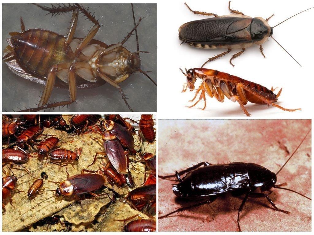 Где живут тараканы: как найти их гнездо в квартире