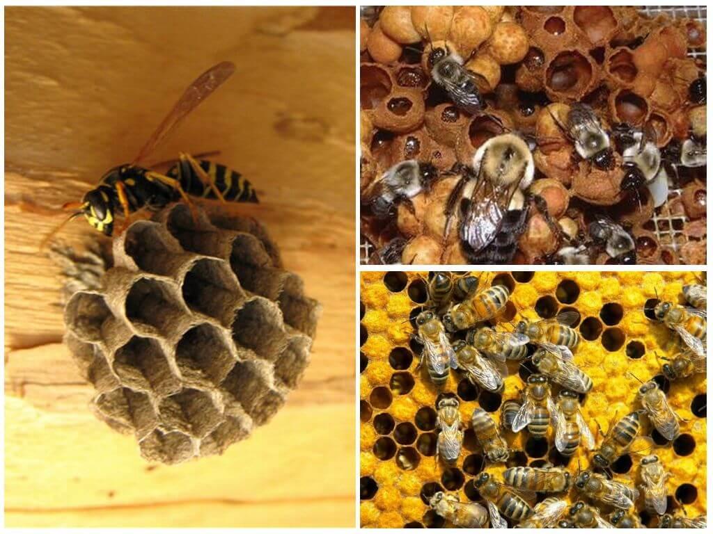 Самые интересные факты о пчёлах, осах и шмелях | vivareit