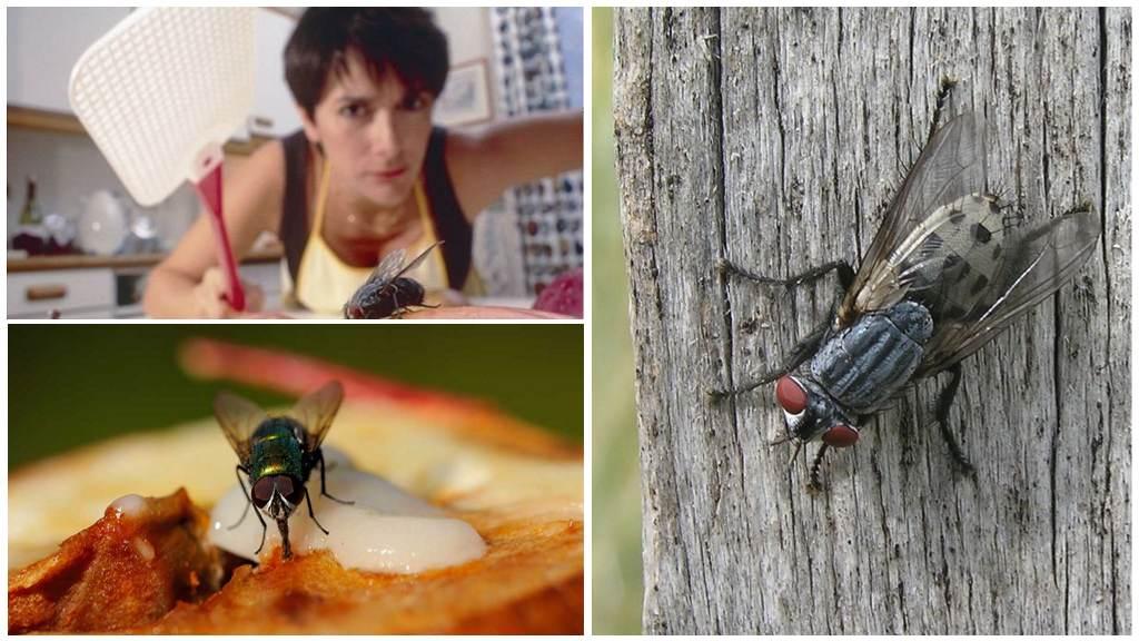 Методы борьбы с дынной мухой