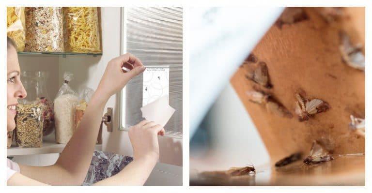 Инструкция как избавиться от моли на кухне: лучшие методы и средства