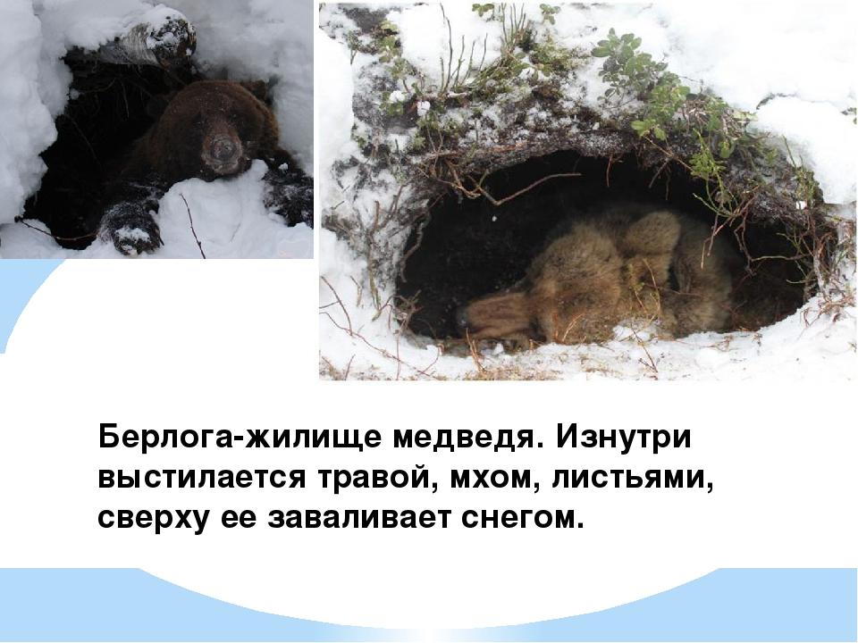 Как зимуют мыши и что они делают зимой, впадают ли в спячку?