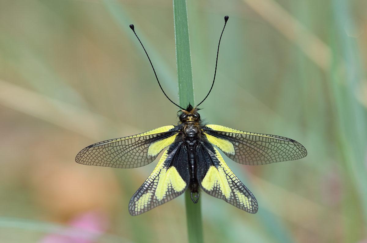 Странные, причудливые и интересные насекомые мира - zefirka