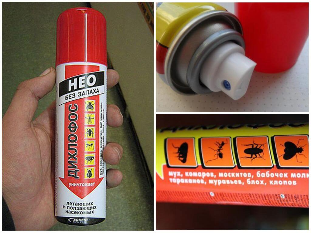 Дихлофос от блох в квартире: с запахом и без, инструкция по использованию
