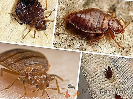 У соседей тараканы куда жаловаться и что делать? | дезстанция