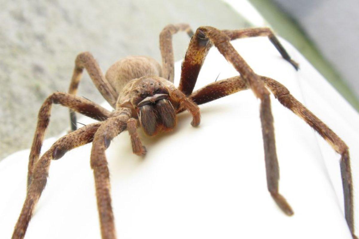Самые страшные пауки – вся правда об арахнидах. самые странные, уродливые и ужасные насекомые (пауки) мира