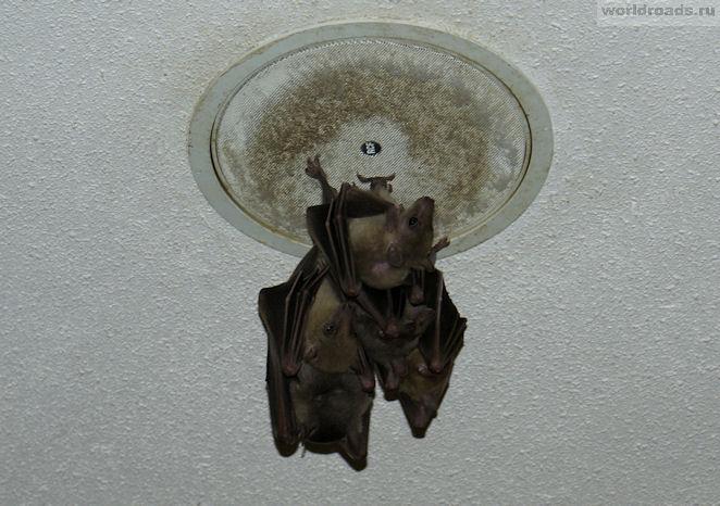 Способы избавиться от мышей под натяжным потолком. мыши в натяжном потолке