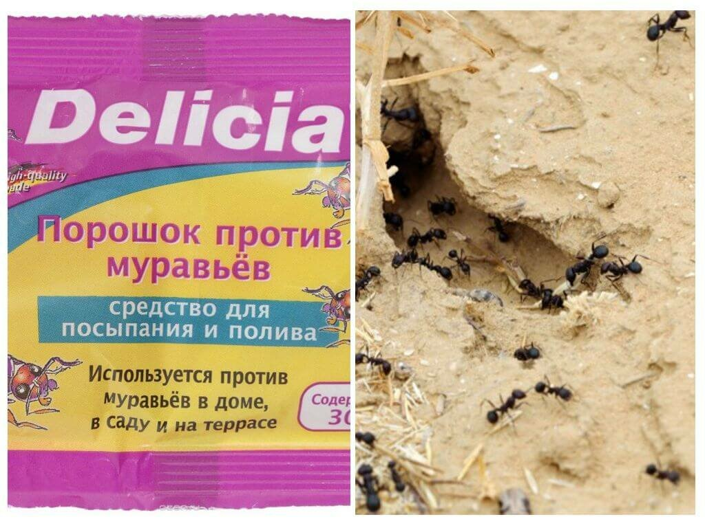 Средства от муравьев из магазина
