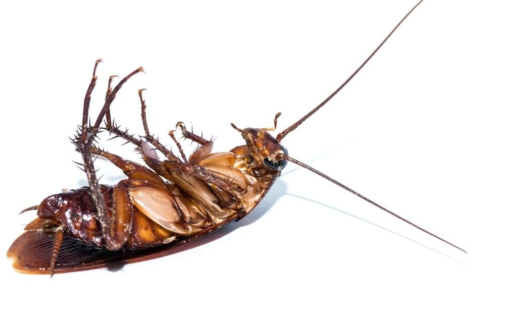 Как называется фобия тараканов. блаттофобия или страх тараканов. психодинамическая теория фрейда