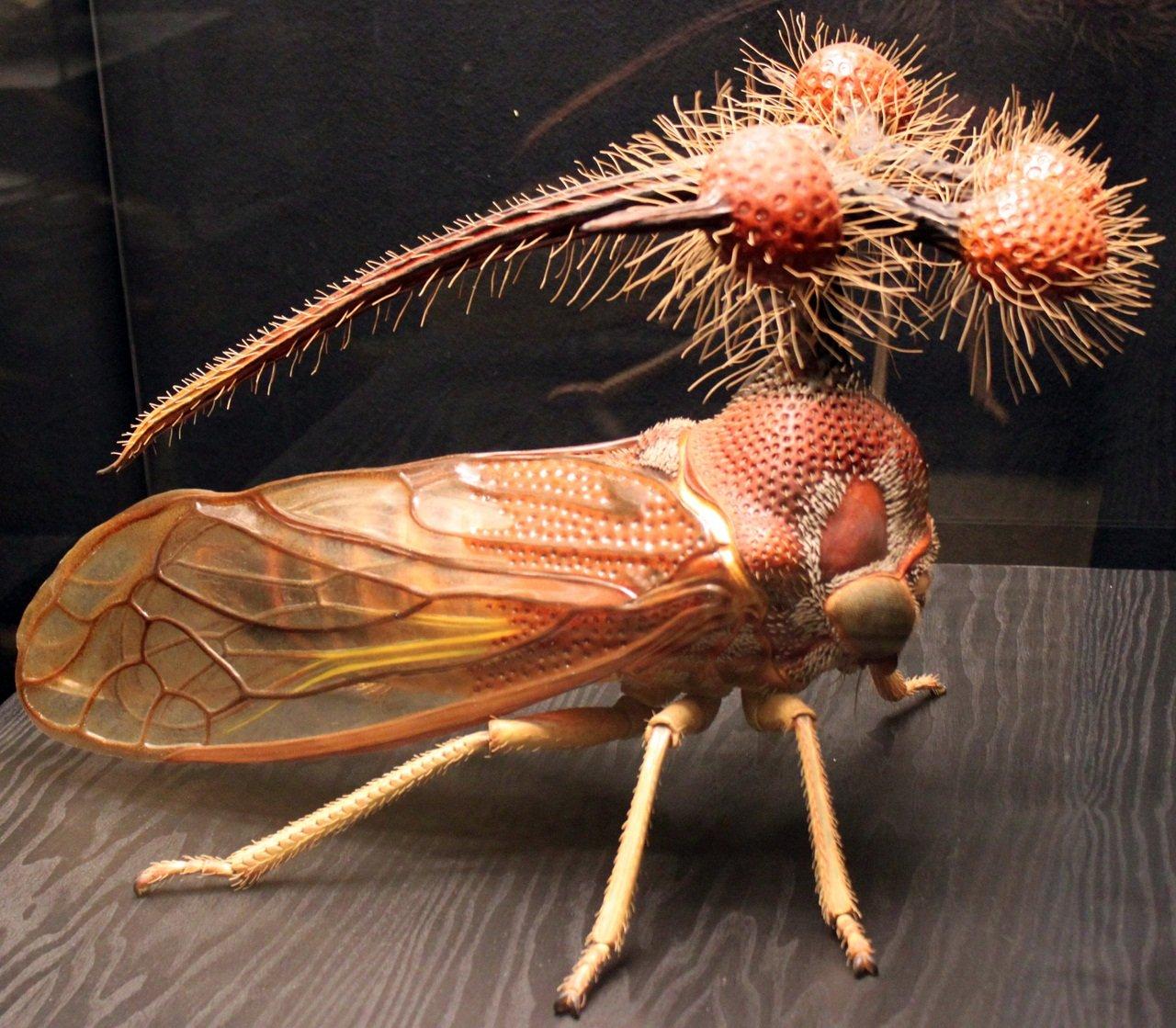 Цикада насекомое. описание, особенности, виды, образ жизни и среда обитания цикады | живность.ру