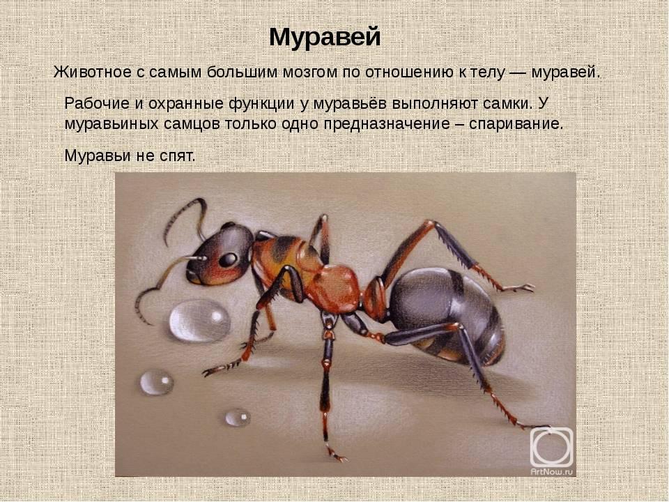 Виды муравьев, их отличительные особенности, строение и рацион насекомых