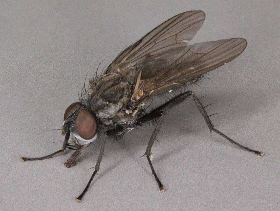Методы борьбы с капустной мухой - борьба с вредителями