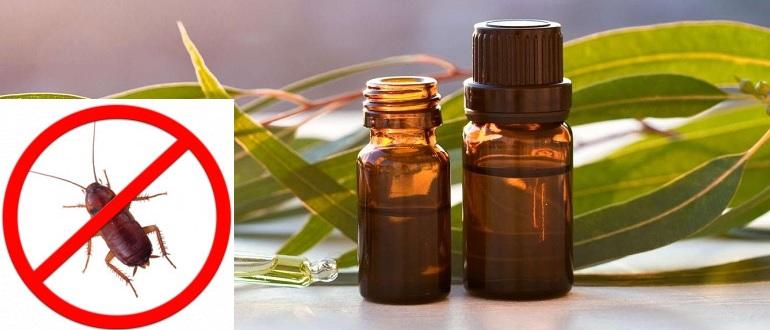 Эфирные масла от блох: правила использования