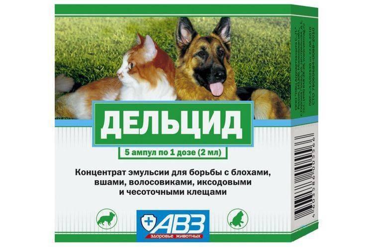 Дельцид - средство от блох: обработка помещений и животных данным инсектицидом