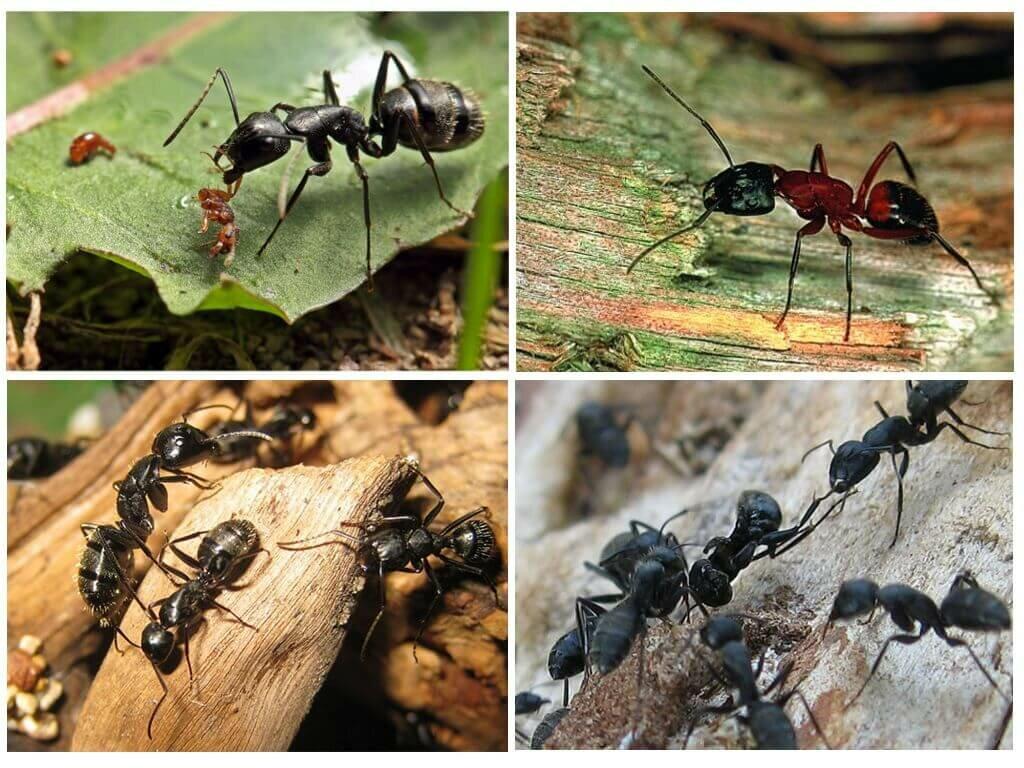 Сколько живет муравей в природе, в домашних условиях