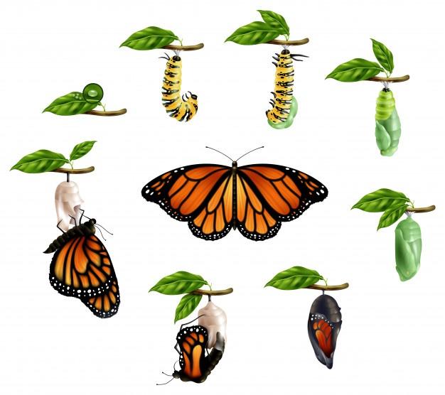 Изменение формы: как гусеница превращается в бабочек