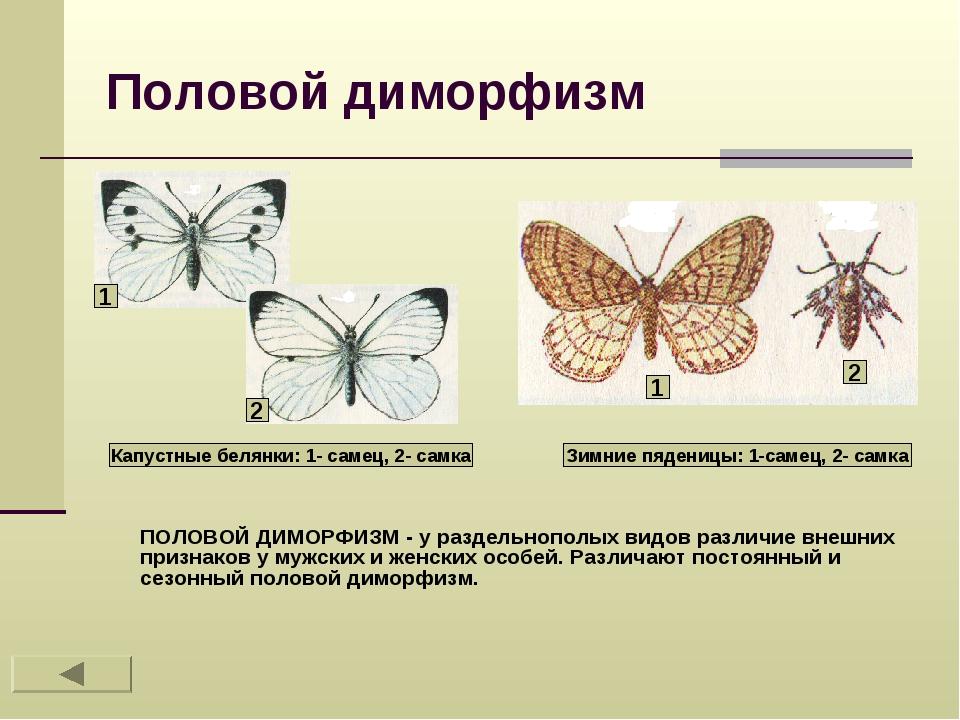 Бражник - характеристика, описание, ареал обитания и интересные факты из жизни насекомого
