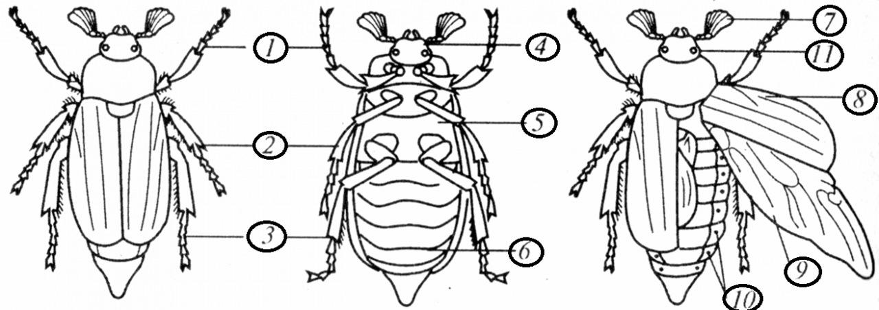 Особенности строения комнатной мухи: как устроены крылья и ротовой аппарат