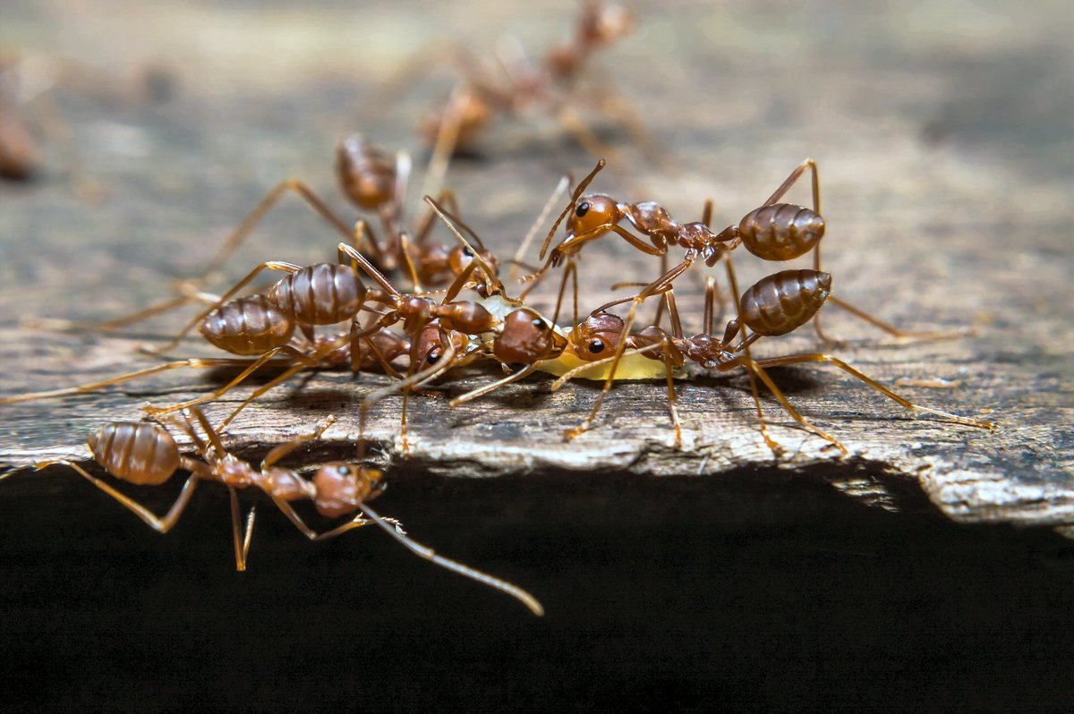 10 интересных фактов о муравьях – маленьких, но очень сильных насекомых