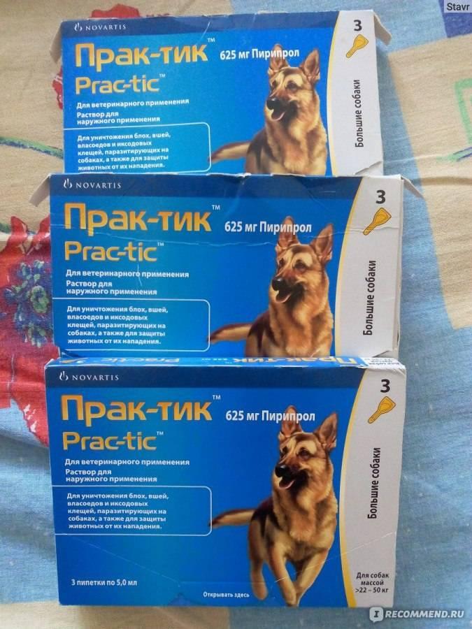 Капли практик от клещей для собак: инструкция по применению, дозировка, противопоказания, аналоги