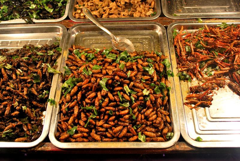 Чем питаются домашние тараканы, что из еды любят больше всего