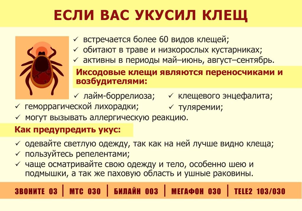 ❶ где в россии обитают энцефалитные клещи - в каких лесах их нет, а где их очень много. откуда в россии взялось столько клещей. есть ли клещи в крыму. отзывы