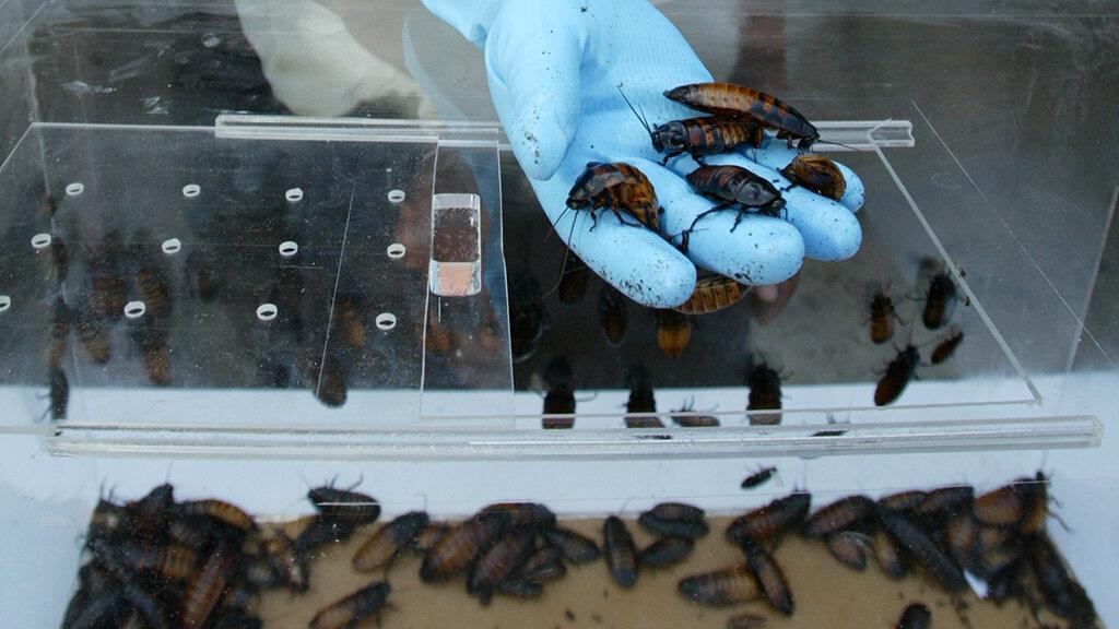 Террариум для тараканов купить – insecta
