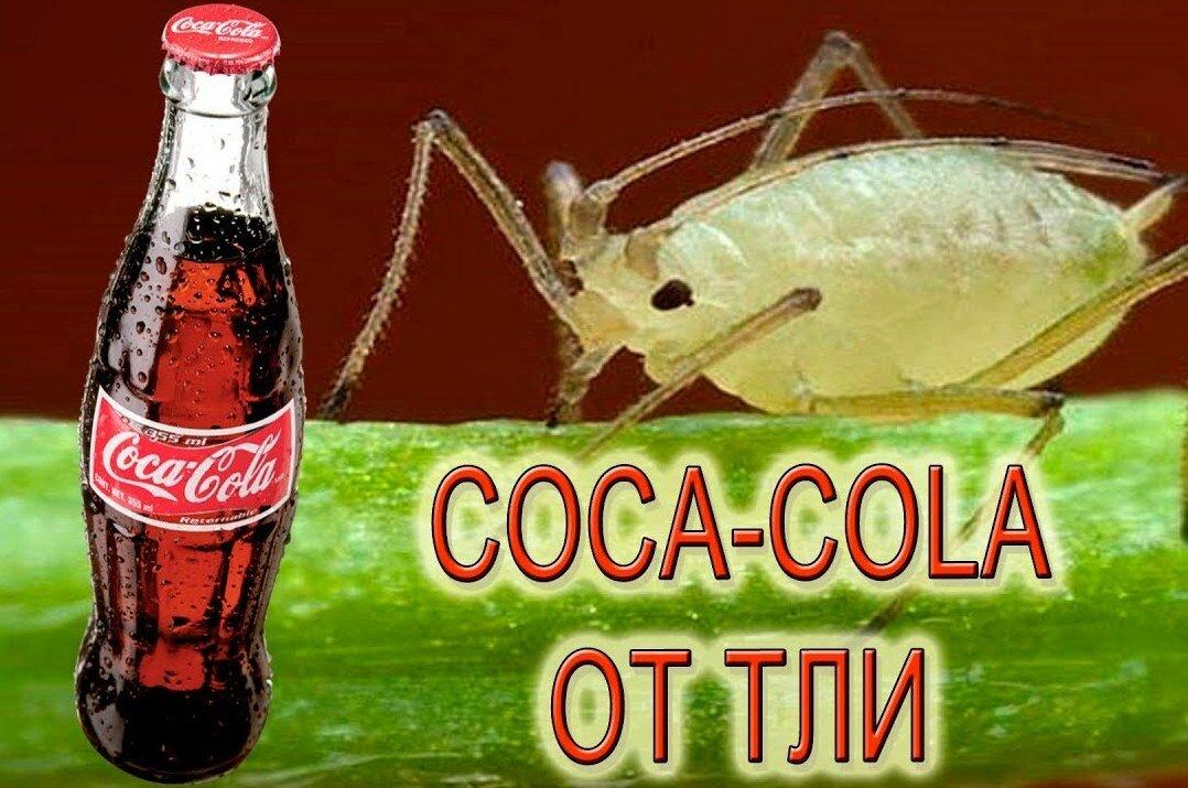 Кока-кола против муравьев - как использовать против тли и муравьев