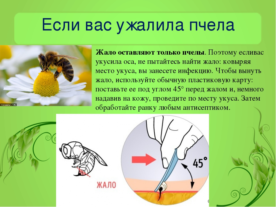 Первая помощь при укусе осы в домашних условиях, чем снять опухоль и боль