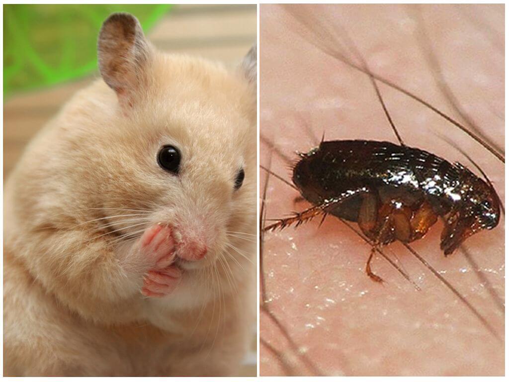 Виды и как из различать: водяные, половые, крысиные, травяные, бельевые, рыжие, черные и другие