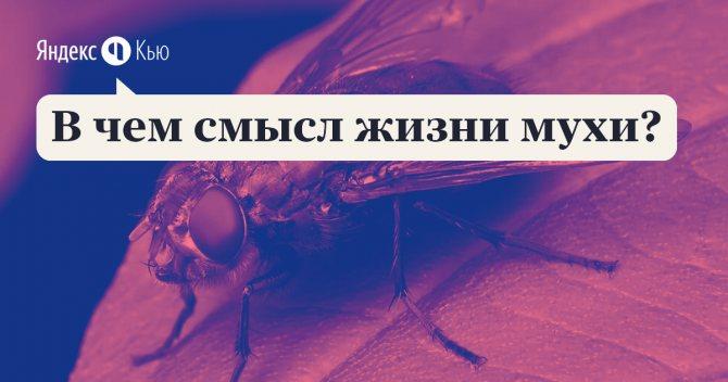 Как быстро убить муху. как убить муху? средства от мух в квартире