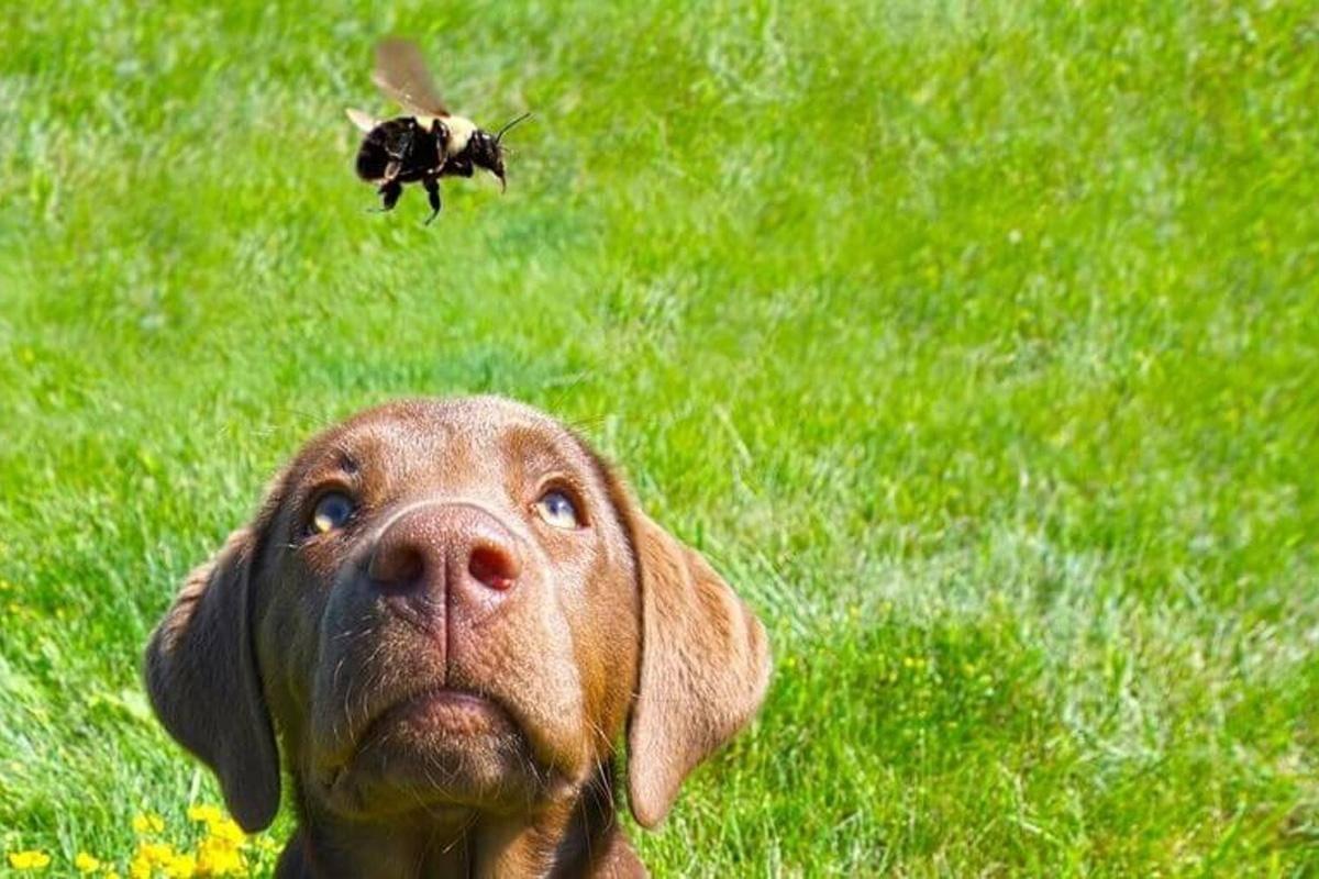 Собаку укусила пчела: что делать, признаки и симптомы