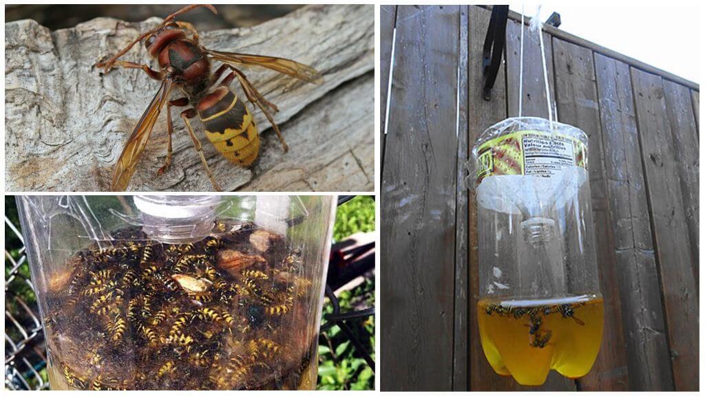 Как избавиться от шершней на даче, чердаке? / как избавится от насекомых в квартире