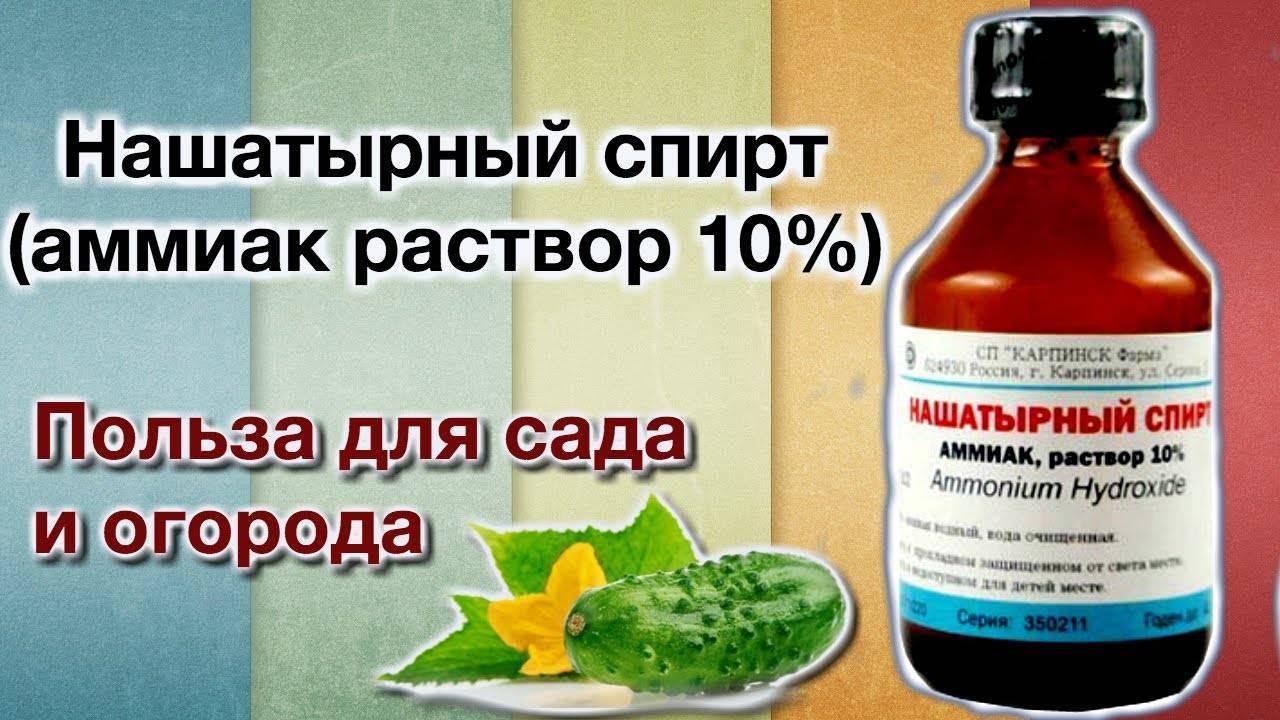 Нашатырный спирт и салициловая кислота — копеечное средство от всех болезней роз