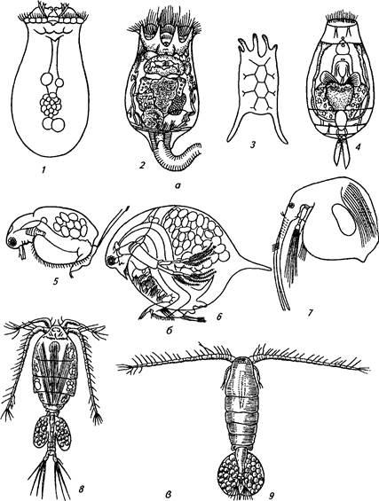 Как размножаются мухи – просто о сложном. как появляются мухи